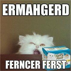 good old cat meme