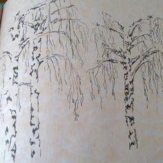 Birch trees pen & ink
