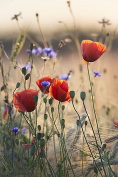 bouquet of wild flowers Photo by Taras L. -- National Geographic Your Shot