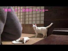 玉之丞さまの猫萌え動画14―映画「猫侍」メイキング - YouTube 【玉之丞さまの猫萌え動画更新】Vol.14は「玉之丞さまのしっぽ」。シッポは口ほどに物を言う。 Neko, Videos, Cats, Youtube, Animals, Gatos, Animales, Animaux, Kitty