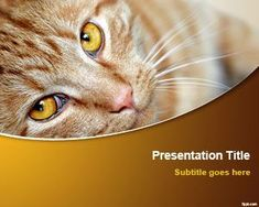 Cat PowerPoint background and PPT Template | Free Powerpoint Templates #powerpoint #background #cat