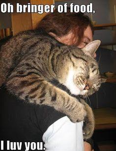 Op deze grappige afbeelding zie je hoeveel liefde je kan krijgen van een kat...