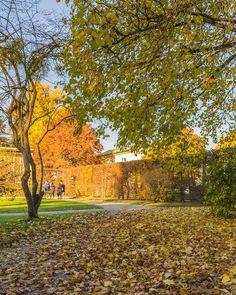 Questa giornata si preannuncia complessa.   Nymphenburger Schloss Park München.