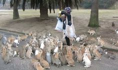 Cute Or Scary? A Herd Of Bunnies Chase A Girl Down For Treats on Bunny Island of Okunoshima, Japan » How have I never known there was a bunny island?!