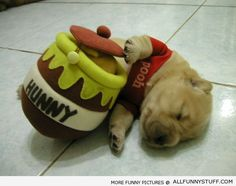 Puppy dog in Winnie the Pooh costume holding honey toy actually do look like Pooh! Love this Winnie the Pooh like dog. Crazy Halloween Costumes, Pet Costumes, Puppy Costume, Bear Costume, Costume Ideas, Puppies In Costumes, Costumes 2015, Funny Costumes, Animal Costumes