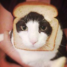 Bread cat!!! Sorry Tippy.