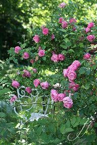 Amongst the roses