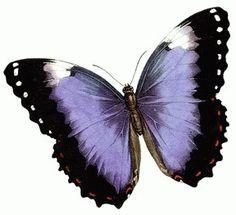 значения татуировок бабочек