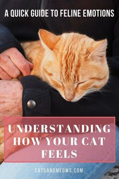 Sometimes, we find ourselves wondering about our cat feels.  #ilovemycat #lifewithcats #healthycat #happycat
