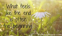 What feels like the end is often the beginning.#quotes #bookwriter #book