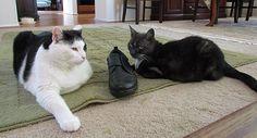 Friday Cat Blogging - 11 May 2012