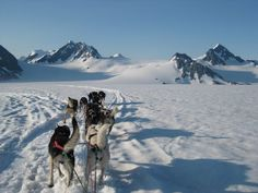 Nautiotter, nautiotterinn, Nauti otter,  glacier, Kenai fjord, kenaifjords, majormarine, Seward cabins, Alaska, Alaskan cabins, fun lodging, unique lodging, hostel, Seward hostel, Alaska hostel, adventure 60, adventure 60 north, dog sledding, Godwin glacier