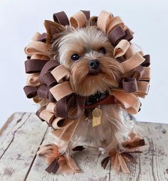 The 20 Best Halloween Pet Costumes...even your ferret, hamster or guinea pig can get involved!