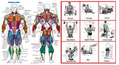Gym Guider Workout Routines Training Plans - Abs workouts - Arm workouts - Back workouts - Biceps workouts - Body weight workouts - Chest workouts - Full-body workouts List Of Bodyweight Exercises, Weight Training Workouts, Body Weight Training, Biceps Workout, Training Exercises, Training Plan, Best Chest Workout, Chest Workouts, Gym Workouts