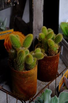 10 off succulents coupon code plant10 valid through august 15 rusty tin cans fandeluxe Gallery