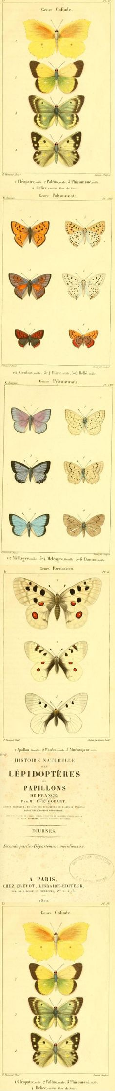 Great  butterfly inspirations in this french book from 1822.