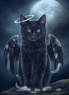 Angel cat art for our beloved black cats. Cat Wisdom 101 Art by Tabitha.❤️ Angel cat art for our beloved black cats. Cat Wisdom 101 Art by Tabitha. Wallpaper Gatos, Cat Wallpaper, Ragdoll Kittens, Cats And Kittens, Bengal Cats, Fat Cats, Hairless Cats, Cats Meowing, Funny Kittens