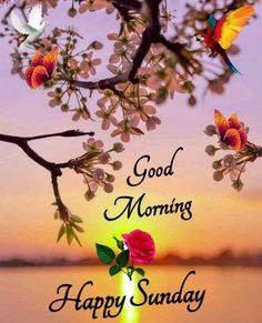 Good Morning Happy Sunday, Good Morning Images, Morning Quotes, Radha Rani, Deep, Gud Morning Images, Good Morning Picture