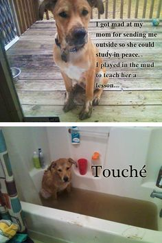 Dog Shaming features the most hilarious, most shameful, and never-before-seen doggie misdeeds. Join us by sharing in the shaming and laughing as Dog Shaming reminds us that unconditional love goes both ways. Humor Animal, Funny Animal Memes, Cute Funny Animals, Funny Animal Pictures, Funny Cute, Funny Dogs, Funny Memes, Hilarious, Animal Pics