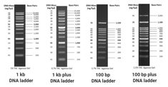 Flow Cytometry, Dna Molecule, Nucleic Acid, October 8, Molecular Biology, Biochemistry, Microbiology