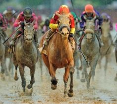 Abel Tasman Storms Home to Win Kentucky Oaks over a sloppy track. She came from dead last to win. May 2017 Derby Time, Abel Tasman, Horse Profile, Horse Names, Sport Of Kings, Thoroughbred Horse, Black Horses, Racehorse, Kentucky Derby