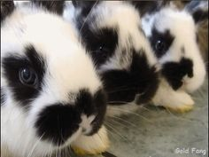 These bunnies look just like my little Muffin bunny ;)