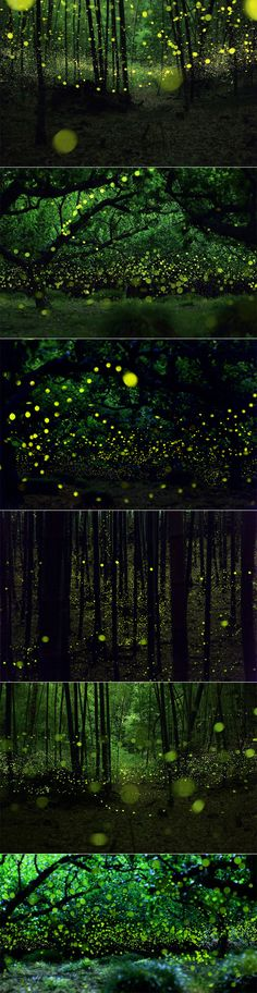 """""""The Last Dance of Fairies"""" by Yume Cyan Lighting Bugs, Welcome To The Jungle, Fireflies, Nature Animals, Natural World, Cinematography, Beautiful Images, Cosmos, Light In The Dark"""
