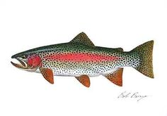 Pix For > Rainbow Trout Paintings