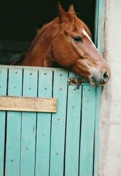 Horse ~ Turquoise barn