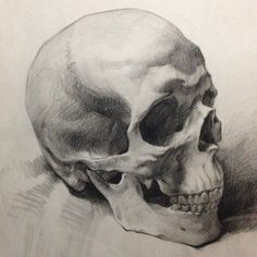 Artist Instagram: @paintingstallion  #skull #figure #drawing #ideas #inspiration #anatomy #graphite