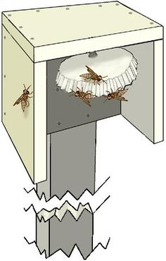 """Paper wasps are great beneficial insects that have a huge appetite for caterpillars. To attract paper wasps, build a wooden box at least 4""""x4"""" with an open bottom mounted on a post 4-6 feet off the ground."""