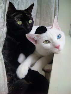 color does not matter.......love the black kitty's paw on the white kitty's head.