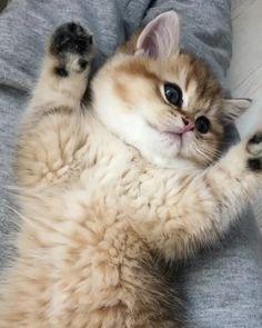 . . . @family_cubby  #cat #mycat #lovecat #instacat