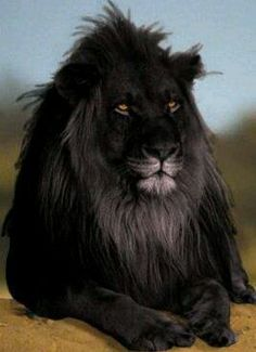 #blacklion