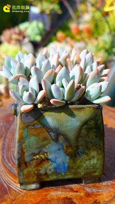 Love this idea. I so often see beautiful ceramics for sale.  A way to combine them.