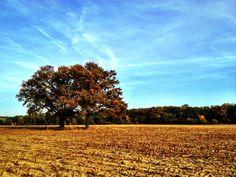 Herbstaufnahmen