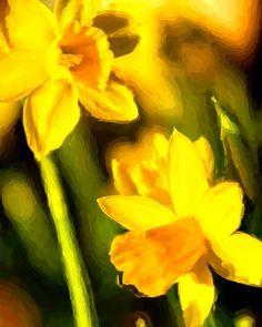 Spring is in the air #flowers  #spring #likeforlike  #photopainting  #daffodil  #yellow  #editz4fun  #pentaxk3  #zoom  #nikcollection  #fotografie  #photography  #fotovandedag  #fotooftheday  #manipulation  #lente  #primavera  #tuin  #zoomnl  #fruhling  #painting  #fotografia  #fotograaf  #garden  #nature #narzissen  #behance #pentax #blumen  #narcis