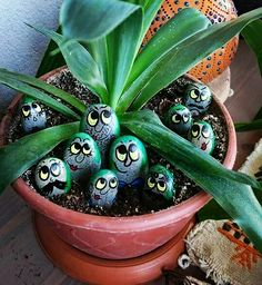 Cute painted rocks in plant
