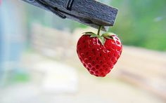 Strawberry Wallpaper Miscellaneous Other Wallpapers) – HD Wallpapers Strawberry Hearts, Strawberry Patch, Strawberry Fruit, Strawberries, Strawberry Picking, Strawberry Cheesecake, Cherries, I Love Heart, Happy Heart