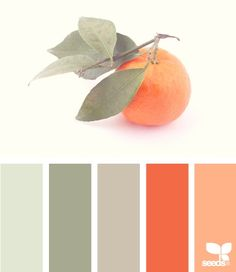 fresh picked color palette on design seeds - peach and gray for summer. Colour Pallette, Color Palate, Color Combinations, Orange Palette, Summer Colour Palette, Orange Color Palettes, Modern Color Palette, Design Seeds, Color Concept