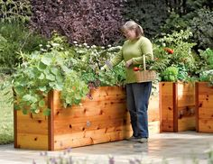 raised garden bed plans - Google Search