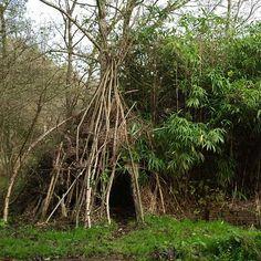Just branches/sticks in garden Kinfolk Magazine, Campfires, My Secret Garden, Edible Garden, Nature Crafts, Dream Garden, Ecology, Garden Inspiration, Gnomes