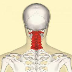 Гимнастика для шеи — четыре шага к гибкости и красоте! Всего четыре упражнения, которые кажутся банальными на первый взгляд, при регулярном выполнении помогут подтянуть кожу шеи, нормализовать сон и даже избавиться от болей в шейном отделе позвоночника и головных болей. Гимнастика для шеи поможет улучшить