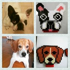 Dog magnets hama beads by evi7aam