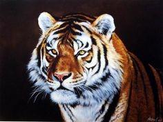 Edward Aldrich Siberian Tiger #BigCatFamily
