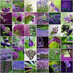 purple & green | Flickr - Photo Sharing!
