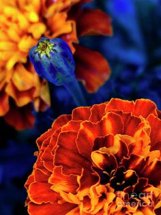 Orange and blue Photograph  - Orange and blue Fine Art Print