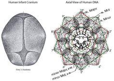 Harmonic patterns 5