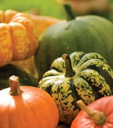 Winter squash is abundant in vitamins A and C. Learn more about the many varieties and how to cook with it in our how-to guide!