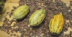 Cacao y chocolate: la historia que los une